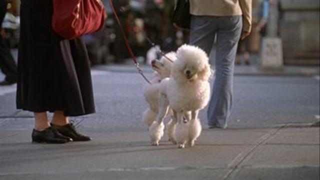 Kate & Leopold - Pick the Poop Up
